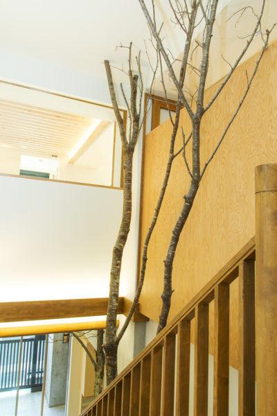 保育園、東京、品川区、戸越公園、一級建築士事務所、建築家、木育、もくいく、アスパイーエックス、さんさん森の保育園、N&C、四季の枝